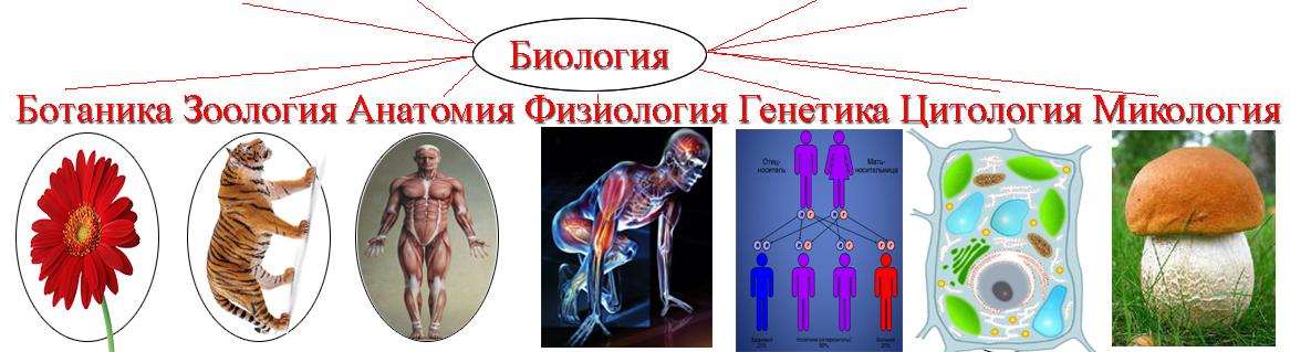 ЕГЭ биология-0009