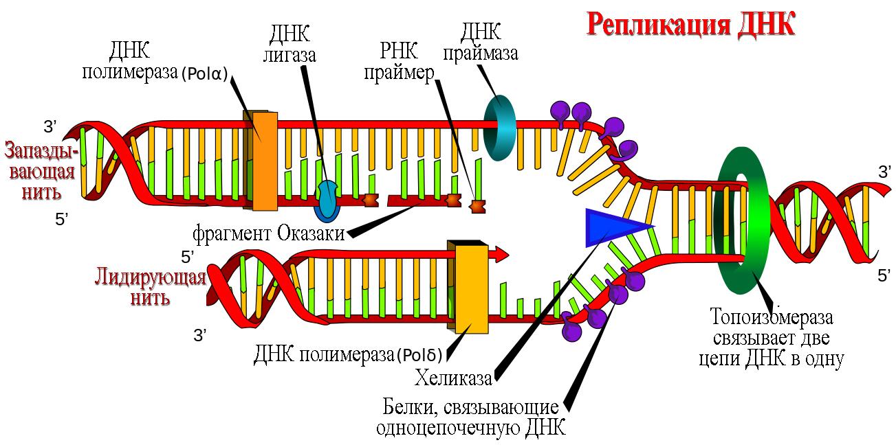ЕГЭ по биологии 012-1