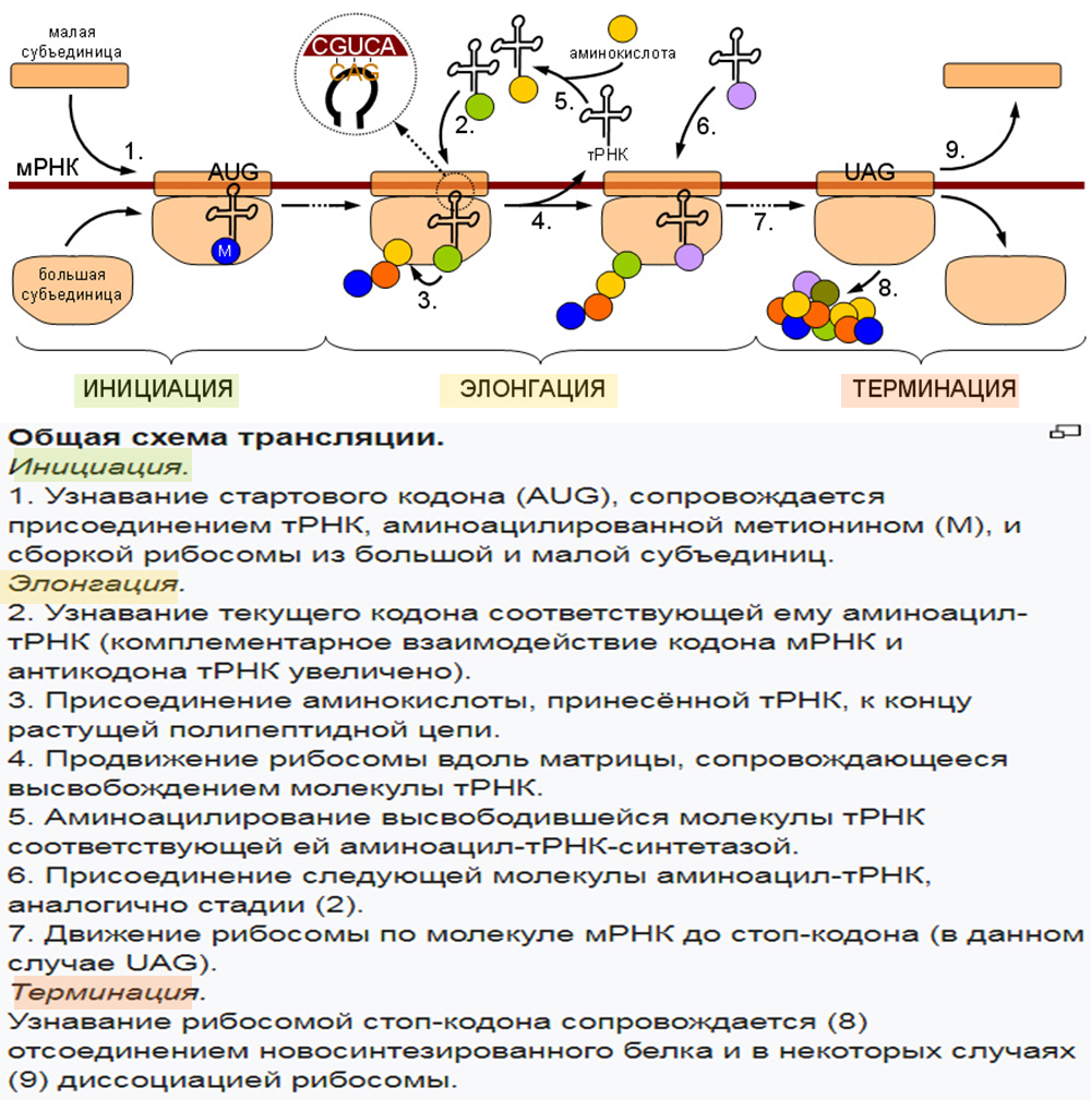 ЕГЭ по биологии 012-3