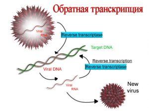 ЕГЭ по биологии 012-4