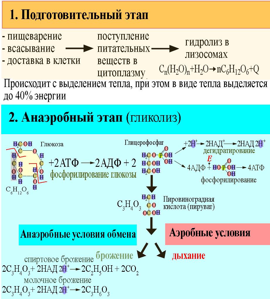 ЕГЭ по биологии 0121