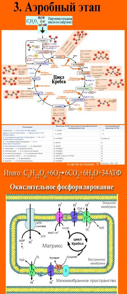 ЕГЭ по биологии 0122