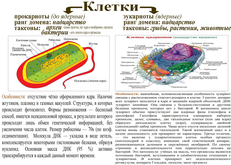 ЕГЭ по биологии 51
