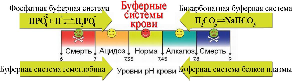 ЕГЭ по биологии 620