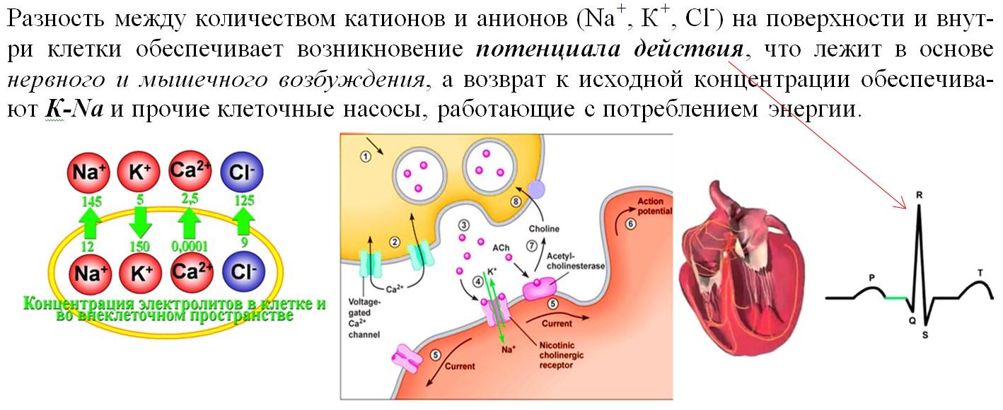 ЕГЭ по биологии 65