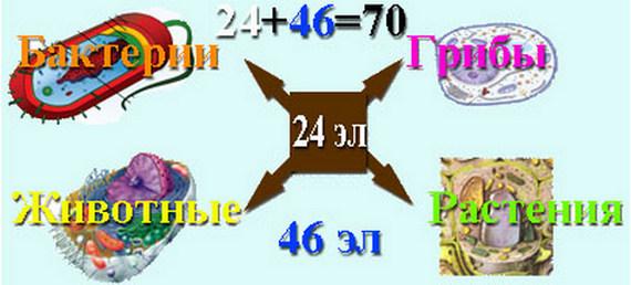 ЕГЭ по биологии-661