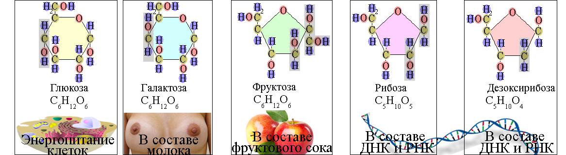 ЕГЭ по биологии 73