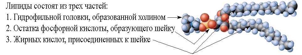 ЕГЭ по биологии 792