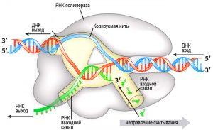 ЕГЭ по биологии 96